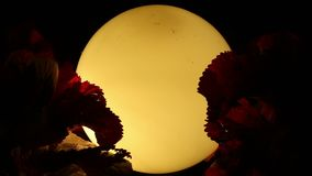 Gamla lampa och växter i brisen stock video