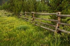 Gamla lantliga staket och vildblommor i Colorado Royaltyfri Fotografi