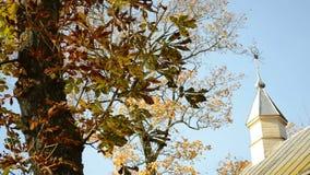 Gamla lantliga träför korshöst för kyrkligt torn sidor för träd för conker arkivfilmer