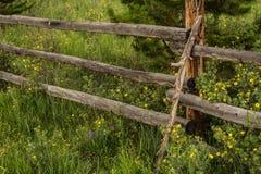 Gamla lantliga Wood staket och vildblommor i Colorado Arkivfoton