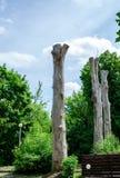 Gamla och döda träd på himmelbakgrund arkivfoton