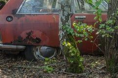 Gamla röda bil och träd fotografering för bildbyråer