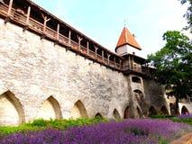 Gamla slottväggar av den Tallinn staden, Estland Arkivbild