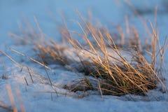 Gamla snöig gras Royaltyfria Foton
