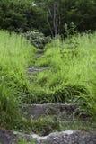 Gamla stenmoment som är bevuxna med mossa och gröna sidor, Cornwall/England arkivbild