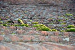 Gamla taktegelplattor som täckas med grönt mossafotografi Arkivfoto