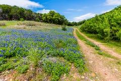 Gamla Texas Dirt Road i fält av Texas Bluebonnet Wildflowers Royaltyfri Foto