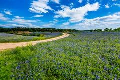 Gamla Texas Dirt Road i fält av Texas Bluebonnet Wildflowers Arkivfoton