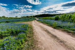 Gamla Texas Dirt Road i fält av Texas Bluebonnet Wildflowers Royaltyfria Foton