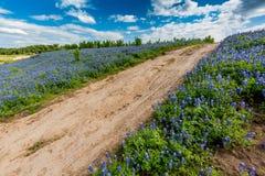 Gamla Texas Dirt Road i fält av Texas Bluebonnet Wildflowers Arkivbilder
