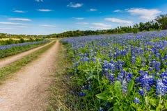 Gamla Texas Dirt Road i fält av Texas Bluebonnet Wildflowers Arkivbild