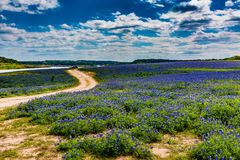 Gamla Texas Dirt Road i fält av Texas Bluebonnet Wildflowers Arkivfoto