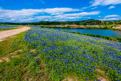 Gamla Texas Dirt Road i fält av Texas Bluebonnet Wildflowers Royaltyfri Bild