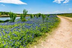 Gamla Texas Dirt Road i fält av Texas Bluebonnet Wildflowers på Royaltyfri Foto