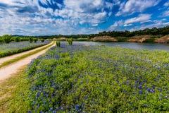 Gamla Texas Dirt Road i fält av Texas Bluebonnet Wildflowers på royaltyfria foton