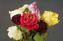Gamla torkade vissnade rosor Royaltyfri Foto