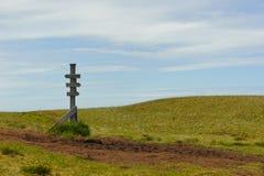 Gamla trä undertecknar in naturen Arkivfoto