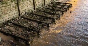 Gamla träbollar som lämnas av den gamla pir på flodbanken Royaltyfri Foto