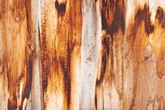Gamla träbräden Royaltyfri Bild