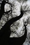 Gamla träd i historiskt centrum av St Petersburg, Ryssland fotografering för bildbyråer