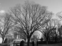 Gamla träd i vinter av Tokyo, Japan Royaltyfria Foton