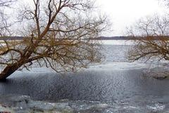Gamla träd nära liten chanel, Litauen arkivbilder
