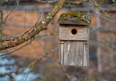 Gamla träfåglar returnerar att hänga på en filial utomhus Royaltyfri Bild