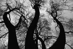 Gamla tr?d i historiskt centrum av St Petersburg, Ryssland arkivfoton