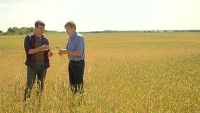 Gamla två bönder undersöker studerar man sommar för vetefältet i fältvetebrödet ultrarapidvideo bonde Smart lager videofilmer