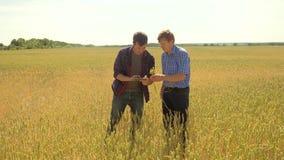 Gamla två bönder undersöker studerar man sommar för vetefältet i fältvetebrödet ultrarapidvideo bonde Smart stock video