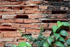Gamla väggtegelstensprickor och retro bakgrund för grön bladkonst Arkivfoto