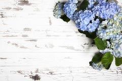 Gamla vita bräden för blåa vanliga hortensior Fotografering för Bildbyråer