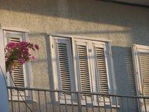 Gamla vita fönster med den stängda slutare och bougainvillean arkivbilder