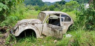 Gamla Volkswagen Beetle som ruttnar i ett fält i Filippinerna royaltyfria bilder