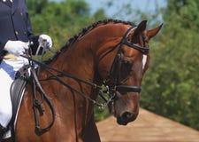 άλογο εκπαίδευσης αλό&gamm Στοκ φωτογραφίες με δικαίωμα ελεύθερης χρήσης