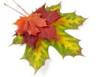 gamma di colori d'autunno dei fogli Immagini Stock Libere da Diritti