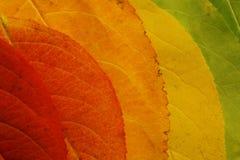 Gamma di colori del foglio di autunno Fotografie Stock