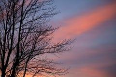 Gamma di colori della natura Fotografia Stock Libera da Diritti