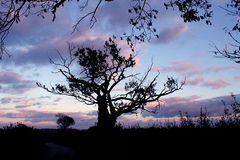 Gamma di colori delle nature Fotografie Stock
