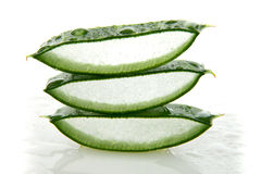 Aloe gamma laminae Royalty Free Stock Photo