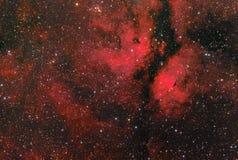 GammaCygni nebulosa Royaltyfri Foto