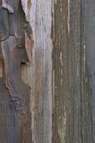 Gammal åldrig riden ut grungefärg-peel wood textur, detaljerad vertikal makrocloseup av naturligt texturerat grungy målat trä för fotografering för bildbyråer