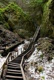 Gammal åldrig wood trappa i natur arkivfoton