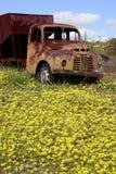 Gammal övergiven Austin lastbil i västra Australien royaltyfria foton