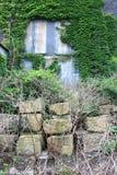 Gammal övergiven industribyggnad med murgrönan Royaltyfri Fotografi