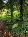 Gammal övergiven kyrkogård Arkivfoto