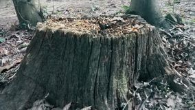Gammal övergiven trädstubbe i träna lager videofilmer