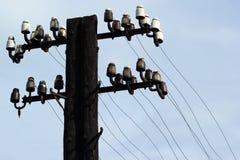 Gammal övergiven träelektrisk pylon med isolatorer och trådar royaltyfria foton