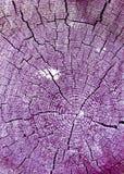 gammal avsnitttree för kors Bakgrund av träplankatexturväggen med utvald signalfärg Abstrakt bakgrund av ett gammalt uppvaktar Royaltyfria Bilder