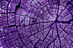 gammal avsnitttree för kors Bakgrund av träplankatexturväggen med utvald signalfärg Abstrakt bakgrund av ett gammalt uppvaktar Arkivfoto